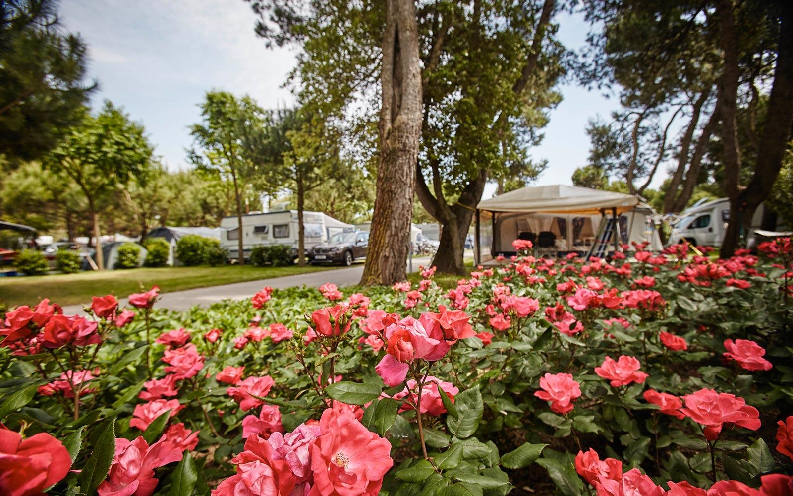 1-Piazzole Camping Dei Fiori